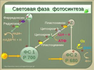 2Н2О О2 4Н+ е Пластохинон Цитохром b АТФ АДФ + Ф Цитохром f Пластоцианин Ферр