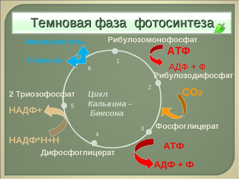 Рибулозодифосфат Фосфоглицерат Дифосфоглицерат 2 Триозофосфат Глюкоза Рибулоз...