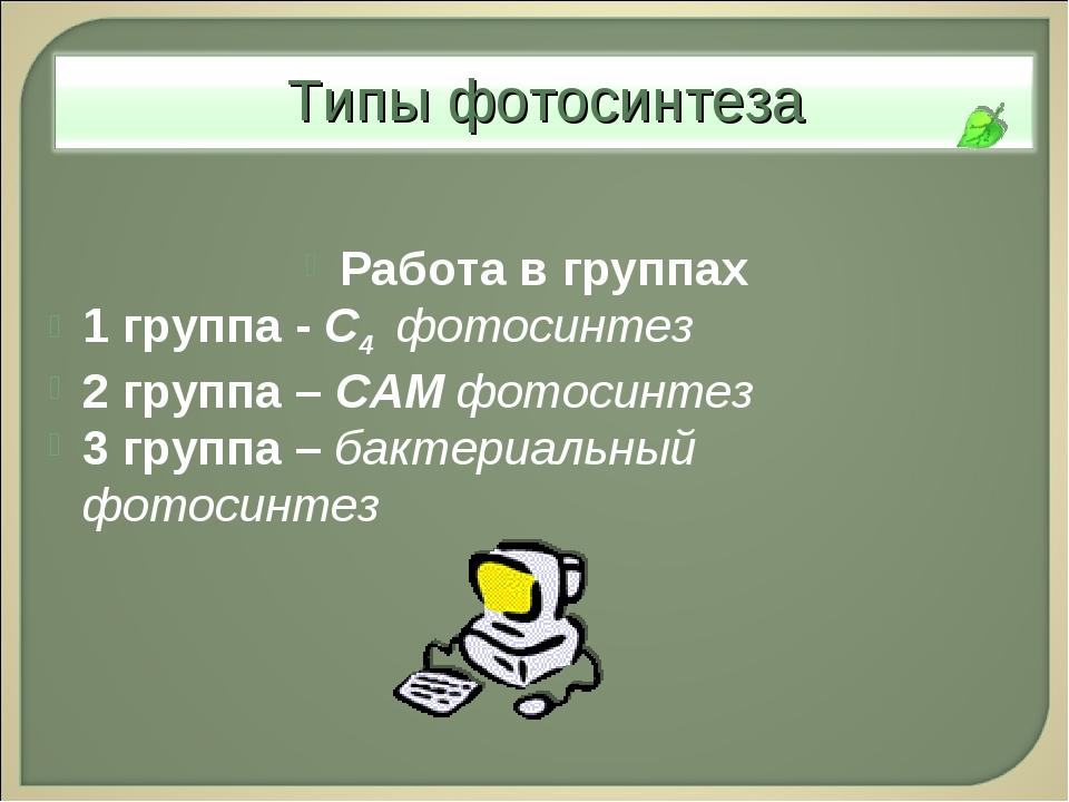 Работа в группах 1 группа - С4 фотосинтез 2 группа – САМ фотосинтез 3 группа...