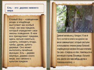 Ель - это дерево нижнего мира Еловый бор – «священная роща» и кладбище высту
