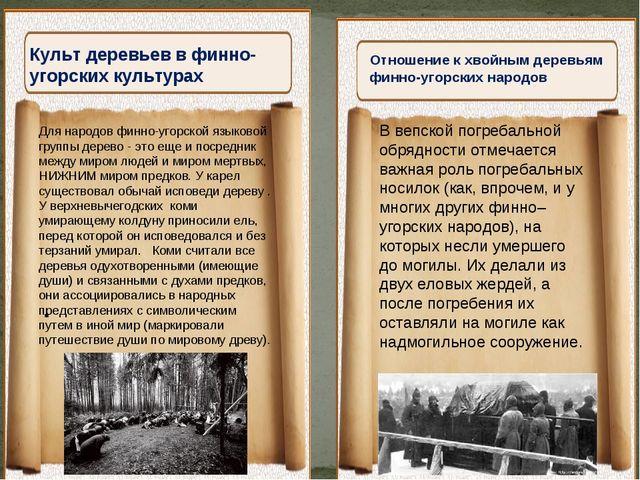 """Культ деревьев в финно-угорских культурах """" Отношение к хвойным деревьям финн..."""