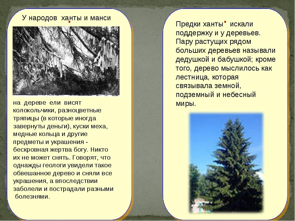 на дереве ели висят колокольчики, разноцветные тряпицы (в которые иногда зав...