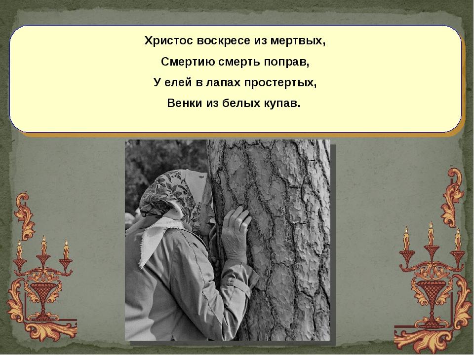Христос воскресе из мертвых, Смертию смерть поправ, У елей в лапах простертых...
