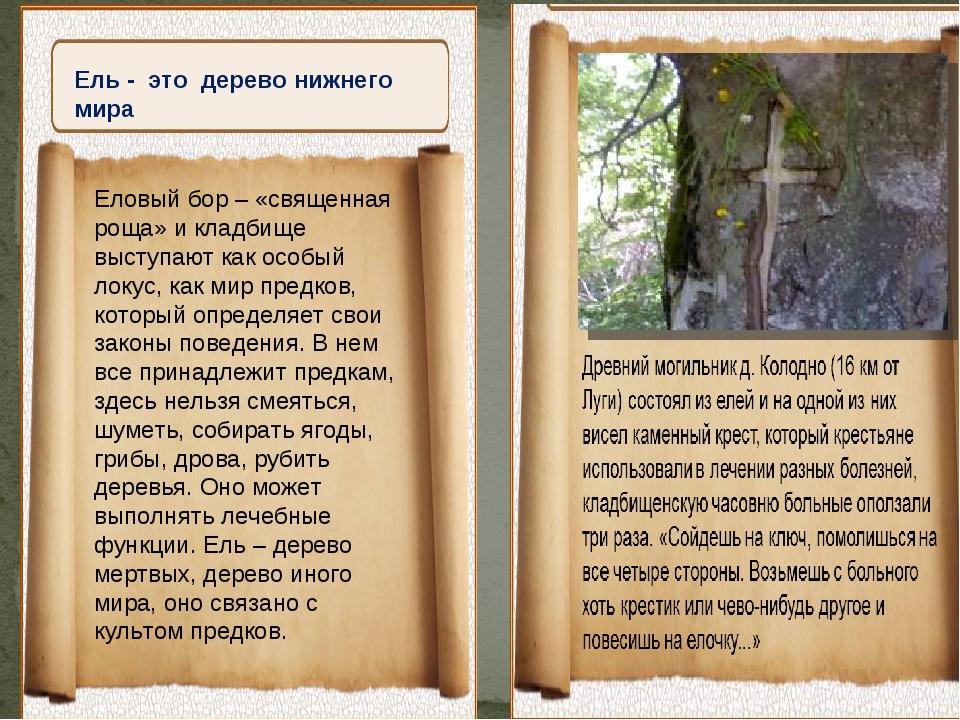 Ель - это дерево нижнего мира Еловый бор – «священная роща» и кладбище высту...