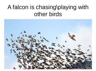 A falcon is chasing\playing with other birds