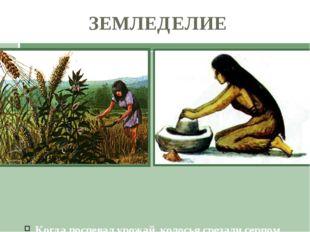 Когда поспевал урожай, колосья срезали серпом. Растирая зерна на плоских кам