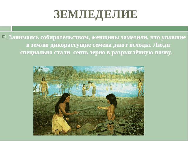 ЗЕМЛЕДЕЛИЕ Занимаясь собирательством, женщины заметили, что упавшие в землю д...