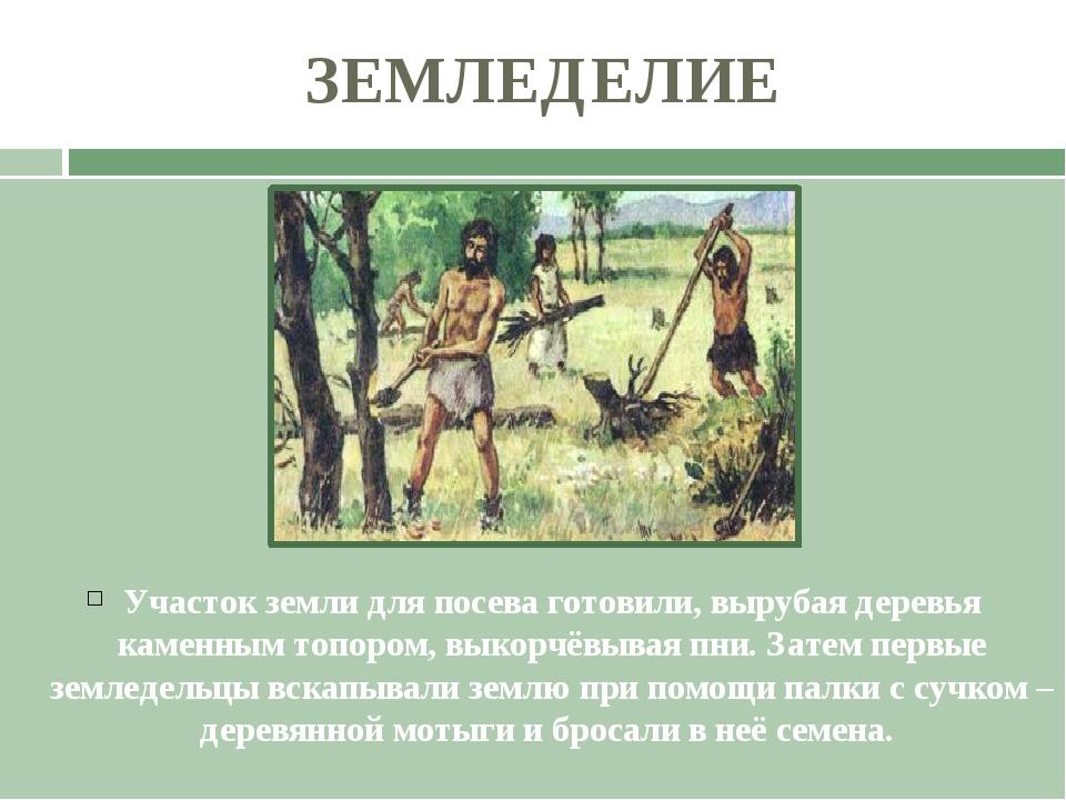 ЗЕМЛЕДЕЛИЕ Участок земли для посева готовили, вырубая деревья каменным топоро...