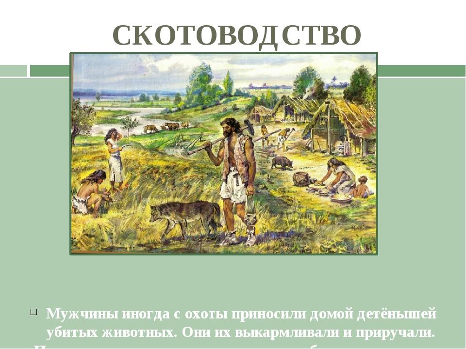 СКОТОВОДСТВО Мужчины иногда с охоты приносили домой детёнышей убитых животных...