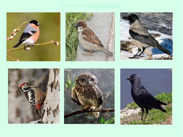 2 задание «Назови птиц»