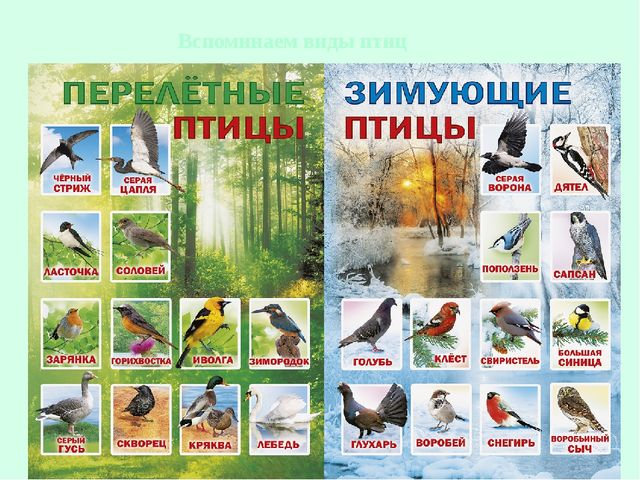 Вспоминаем виды птиц
