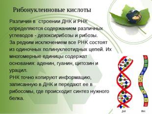 Рибонуклеиновые кислоты Различия в строении ДНК и РНК определяются содержание