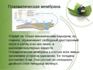 Плазматическая мембрана Служит не только механическим барьером, но, главное,