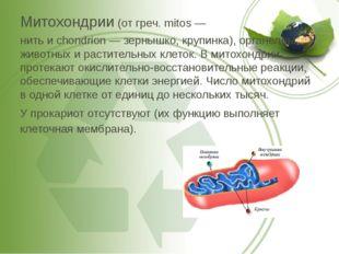 Митохондрии (от греч. mitos — нить и chondrion — зернышко, крупинка), органел