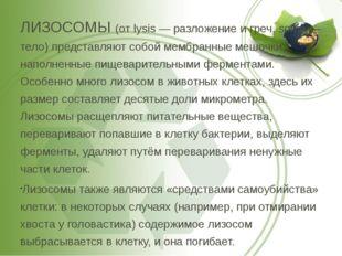 ЛИЗОСОМЫ (от lysis — разложение и греч. soma — тело) представляют собой мембр