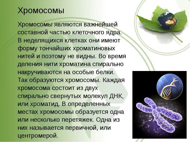 Хромосомы Хромосомы являются важнейшей составной частью клеточного ядра. В не...
