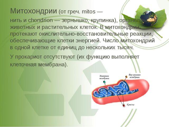 Митохондрии (от греч. mitos — нить и chondrion — зернышко, крупинка), органел...