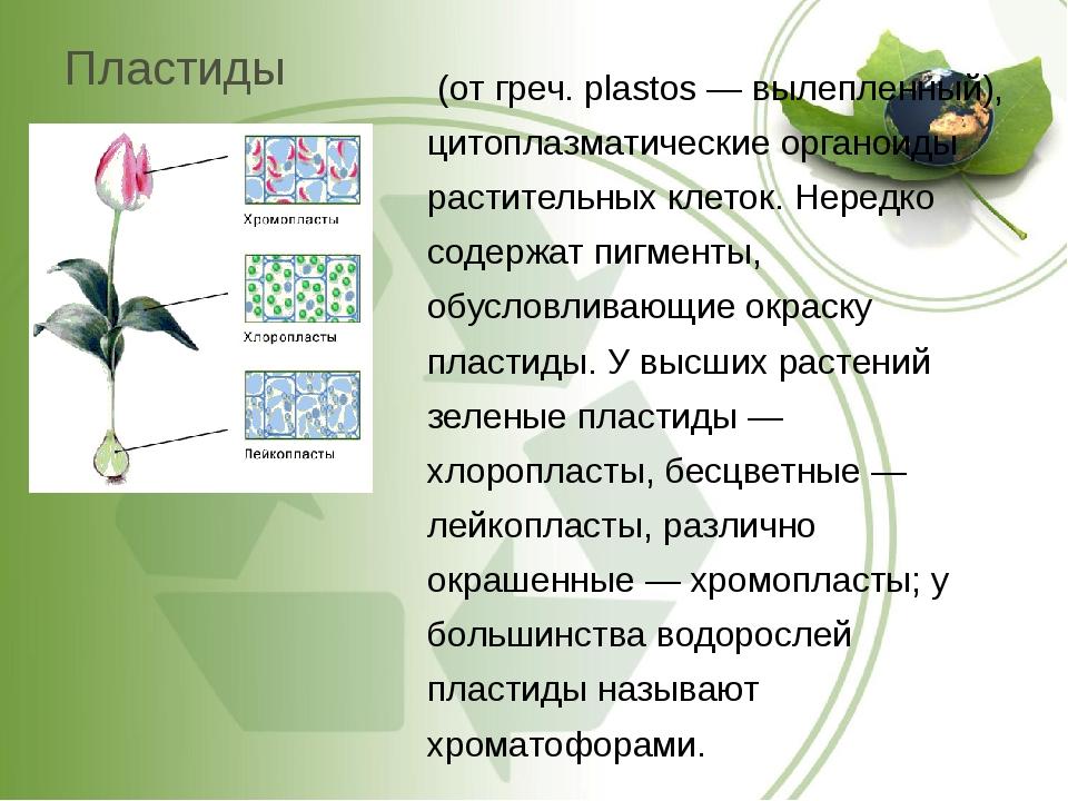 Пластиды (от греч. plastos — вылепленный), цитоплазматические органоиды расти...