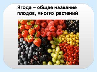 Ягода – общее название плодов, многих растений