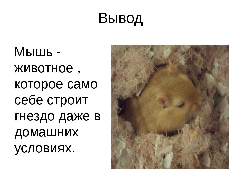 Вывод Мышь - животное , которое само себе строит гнездо даже в домашних услов...