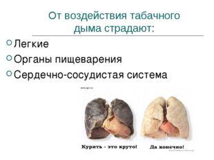 От воздействия табачного дыма страдают: Легкие Органы пищеварения Сердечно-со