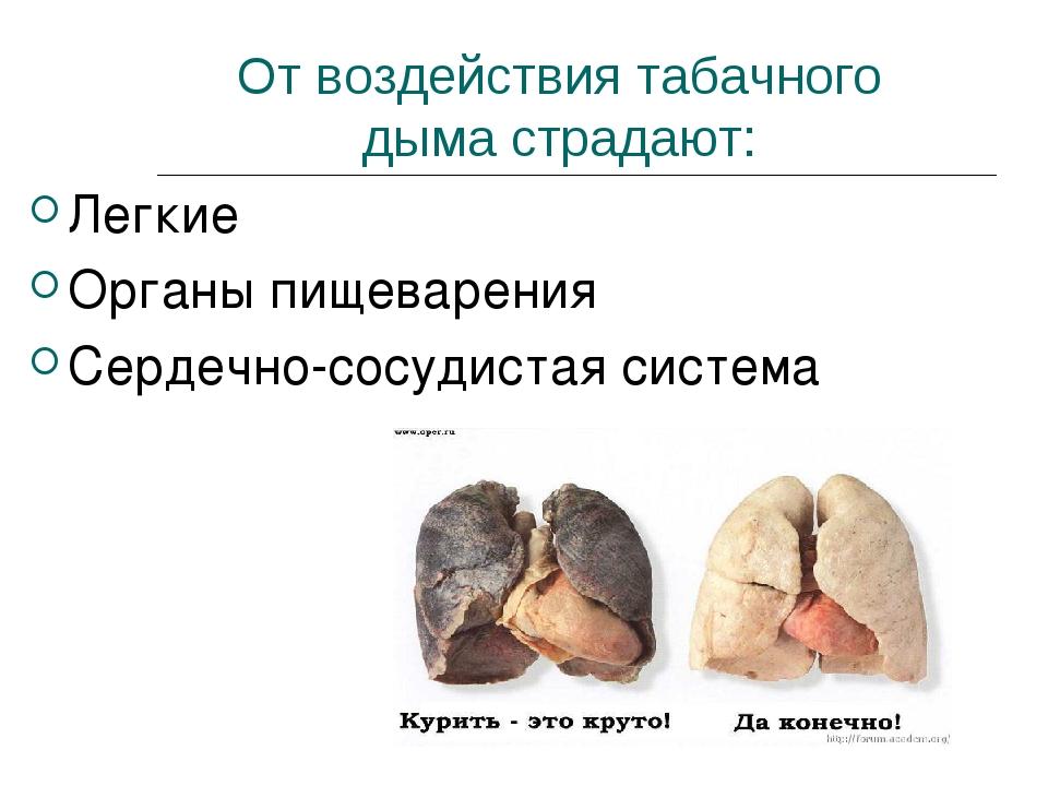 От воздействия табачного дыма страдают: Легкие Органы пищеварения Сердечно-со...