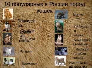 10 популярных в России пород кошек Персидская кошка Мейн Кун Сиамская кошка Б