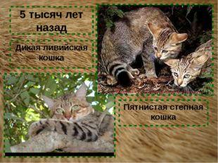 Дикая ливийская кошка Пятнистая степная кошка 5 тысяч лет назад