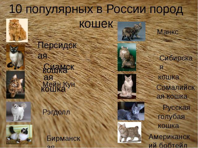 10 популярных в России пород кошек Персидская кошка Мейн Кун Сиамская кошка Б...