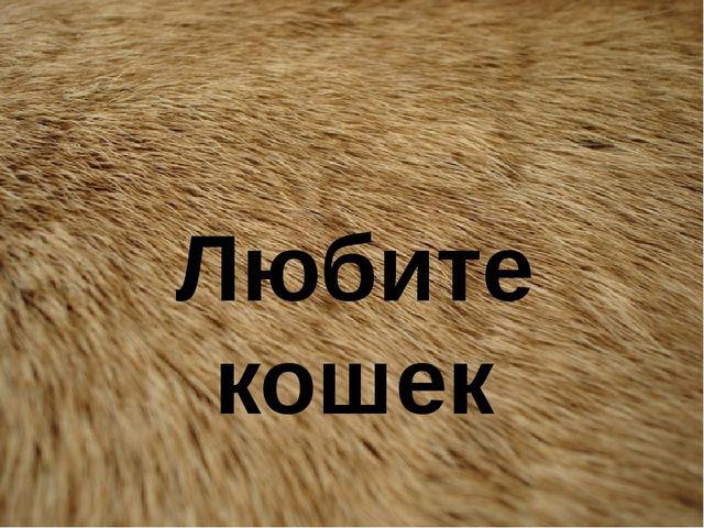 Любите кошек