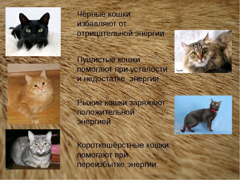 Чёрные кошки избавляют от отрицательной энергии Пушистые кошки помогают при у...