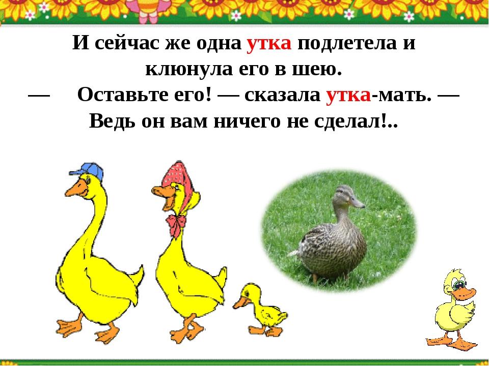 И сейчас же одна утка подлетела и клюнула его в шею. —Оставьте его! — сказал...