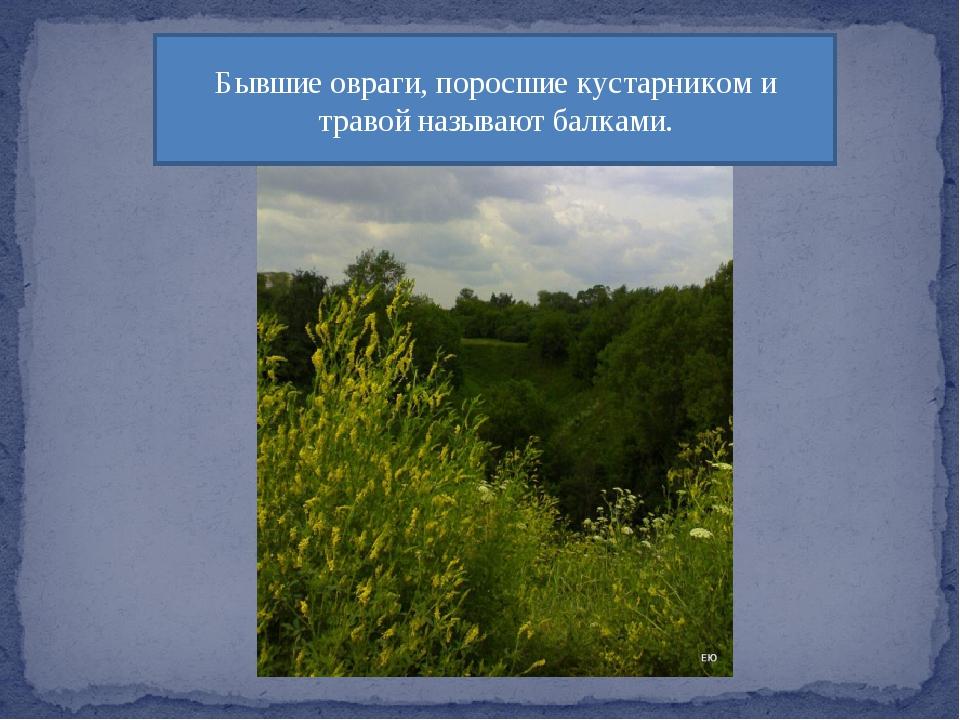 Бывшие овраги, поросшие кустарником и травой называют балками.