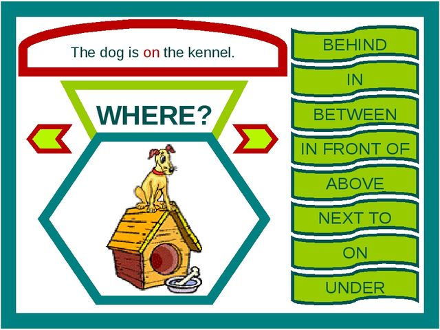 The dog is on the kennel. WHERE? BEHIND IN BETWEEN IN FRONT OF ABOVE NEXT TO...