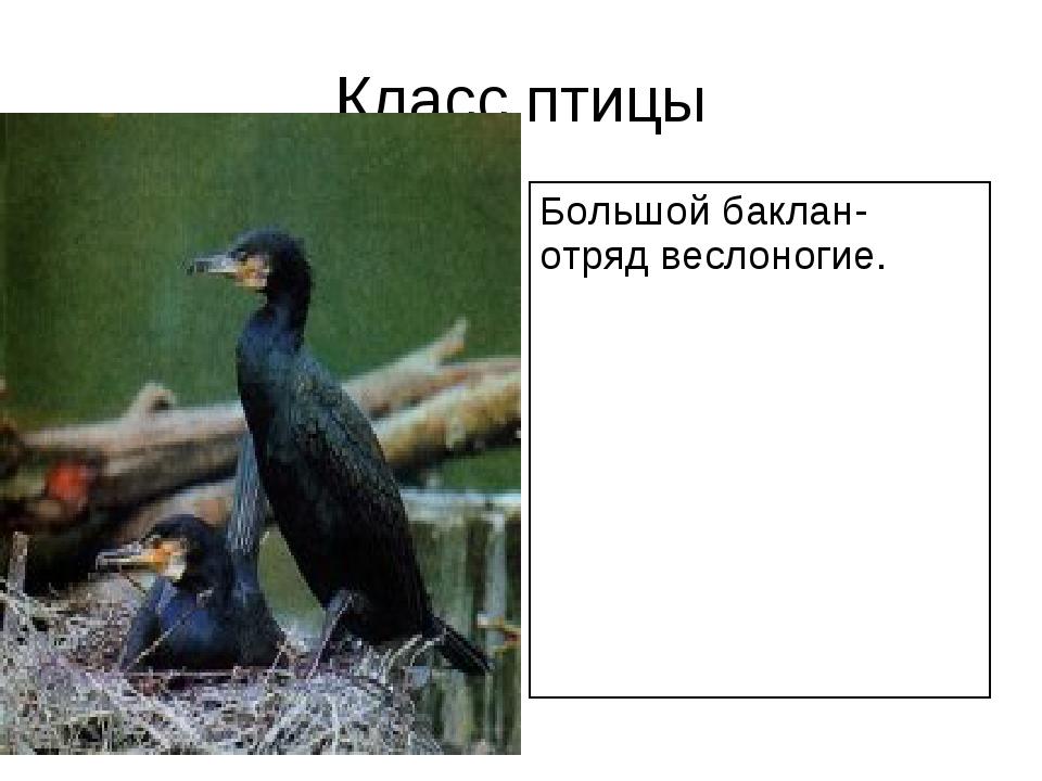 Класс птицы