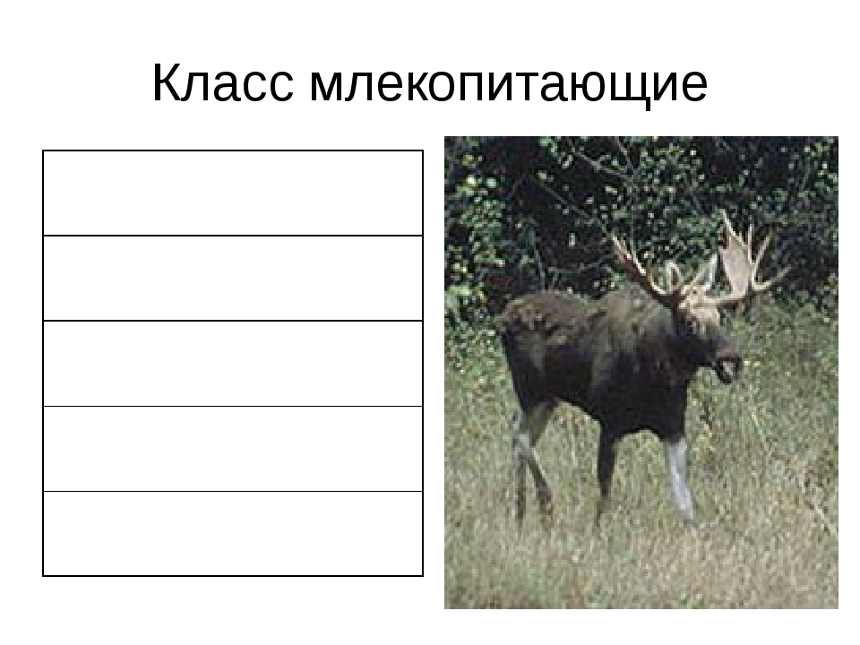 Класс млекопитающие