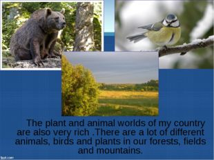 The plant and animal worlds of my country are also very rich .There are a lo