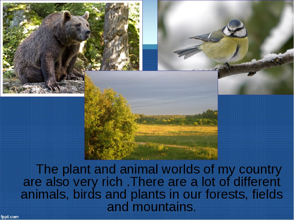 The plant and animal worlds of my country are also very rich .There are a lo...