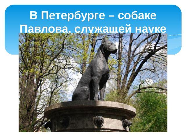 В Петербурге – собаке Павлова, служащей науке