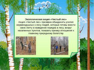 Экологическая акция «Чистый лес» Акция «Чистый лес» призвана объединить усил