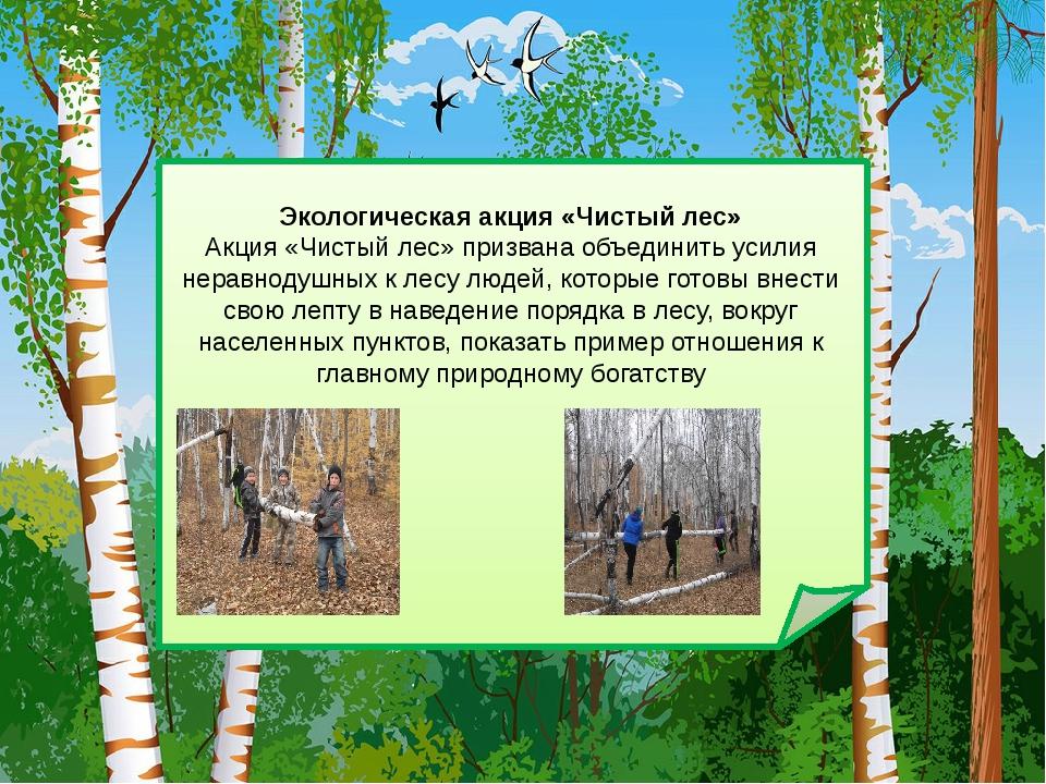 Экологическая акция «Чистый лес» Акция «Чистый лес» призвана объединить усил...