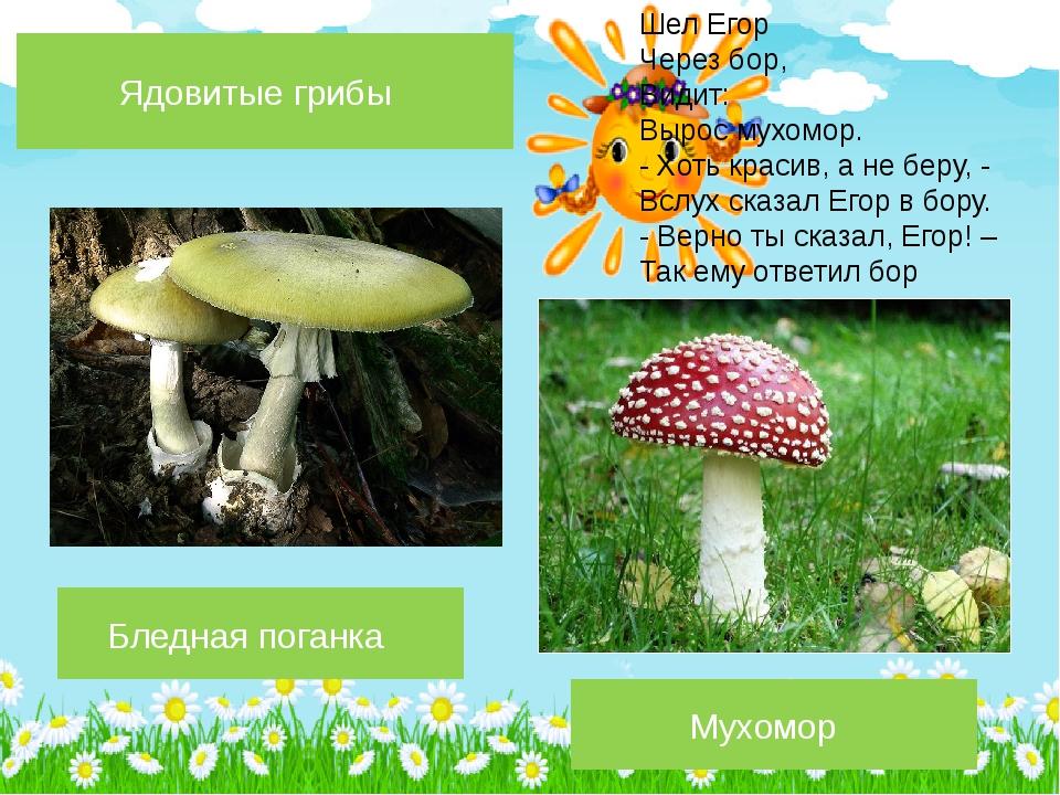 Бледная поганка Мухомор Ядовитые грибы Шел Егор Через бор, Видит: Вырос мухом...