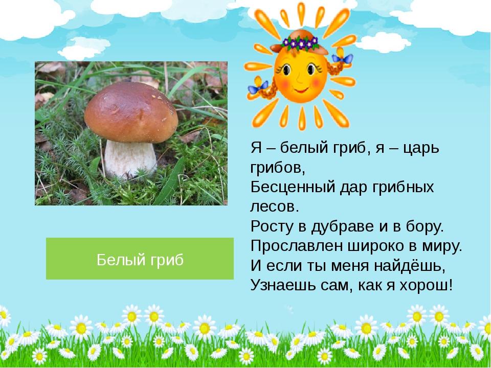 Белый гриб Я – белый гриб, я – царь грибов, Бесценный дар грибных лесов. Рост...