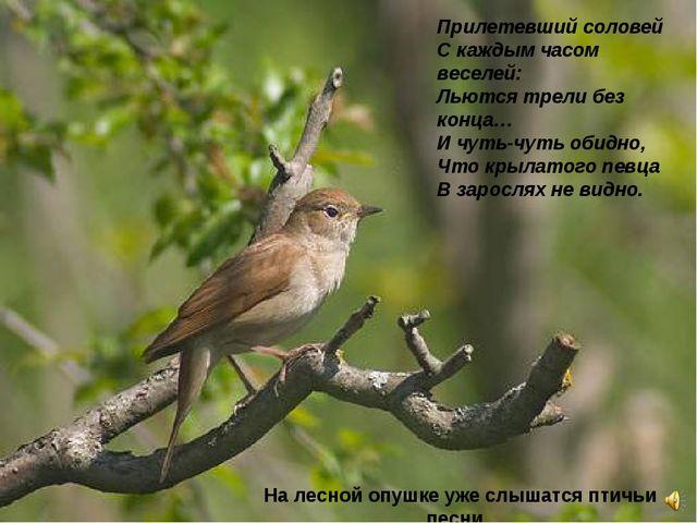Прилетевший соловей Скаждым часом веселей: Льются трели без конца… Ичуть-чу...