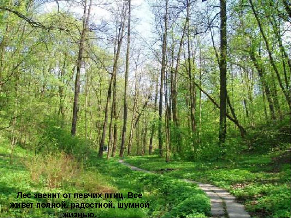 Лес звенит от певчих птиц. Все живет полной, радостной, шумной жизнью.