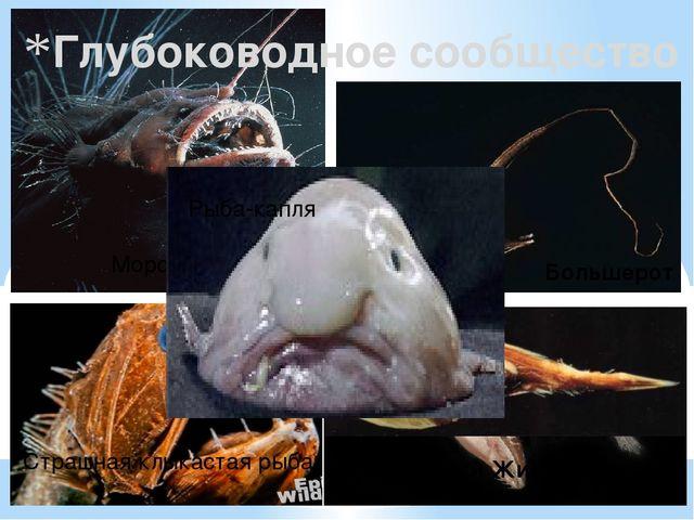 Глубоководное сообщество Большерот Черный Живоглот Морской черт Страшная клык...