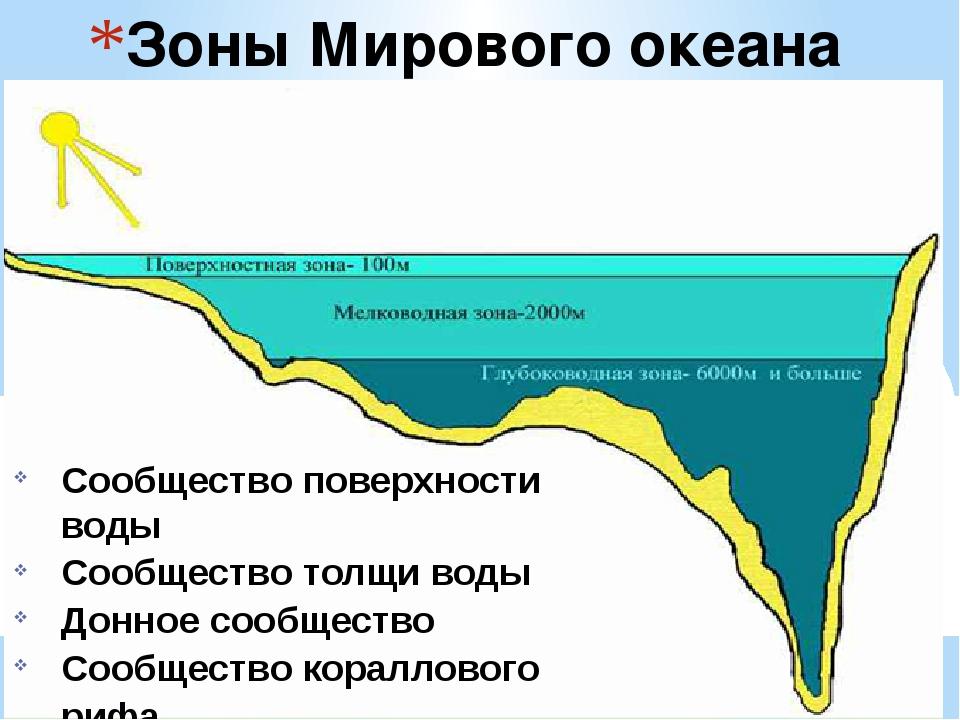 Зоны Мирового океана Сообщество поверхности воды Сообщество толщи воды Донное...