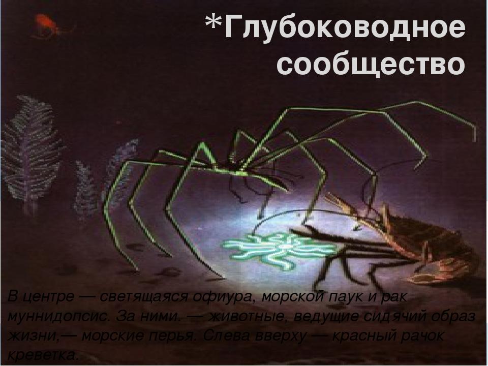Глубоководное сообщество В центре — светящаяся офиура, морской паук и рак мун...