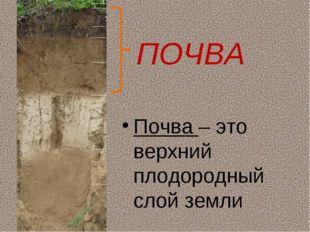 ПОЧВА Почва – это верхний плодородный слой земли