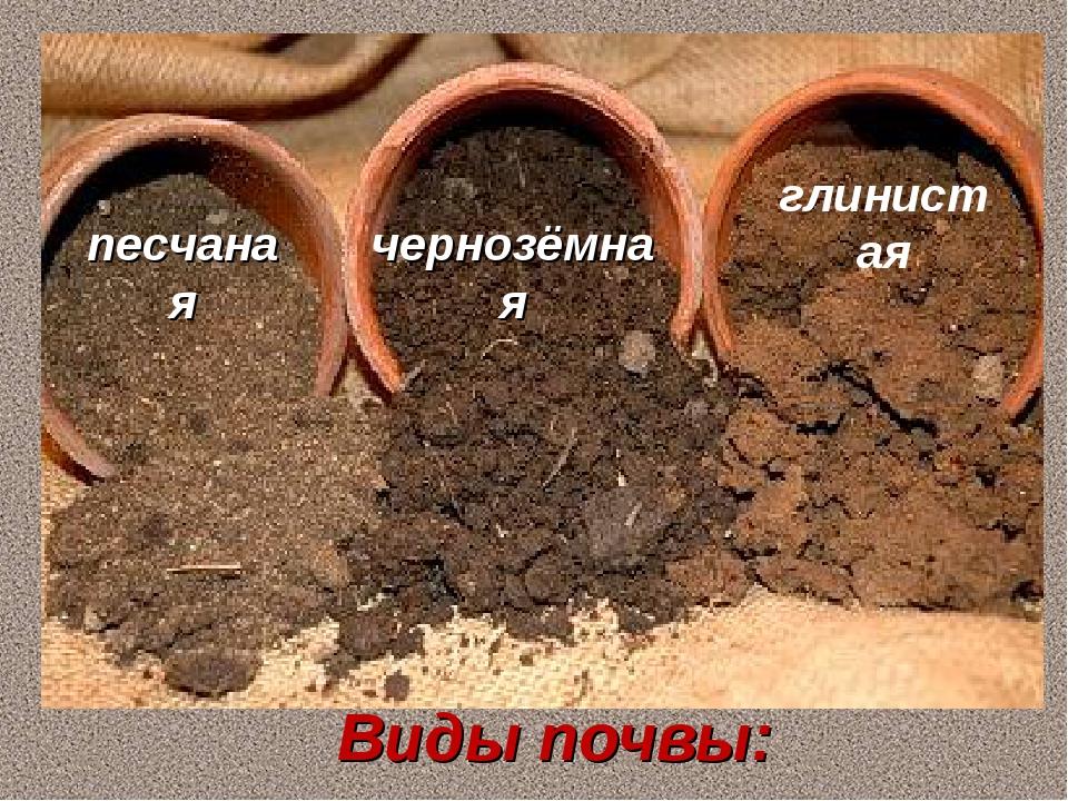 песчаная чернозёмная глинистая Виды почвы:
